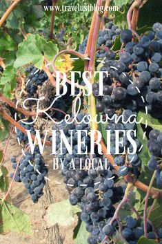 Best Wineries in Kelowna, British Columbia - Travelust. Kelowna is in the Okanagan Valley in BC, Canada. It has ideal grape growing condition and the area has won numerous awards for its wine. With so many wineries to choose, here's helping you narrow it by a local! Mission Hill, Spearhead, Summerhill Pyramid, Tantalus Vineyards, The Vibrant Vines, Cedar Creek, Quails Gate. #Kelowna #Wine #Okanagan #Canada