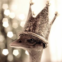 the queen of the ostriches...too cute!