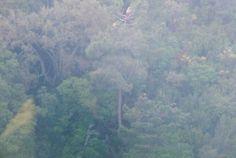 Rutas avistamiento de Buitres http://misierradegata.com/fotos/