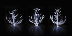 https://flic.kr/p/NRcTos | Clorofila lumínica - Evolución III | Nuevas pruebas de la creación de flores de luz, sigo dándole forma a estos vegetales de luz, esta vez con una sesión más larga y profundizando más en la variedad de formas, ya he creado varias que me gustan bastante.  Creadas con una tira de led blanca y flexible, me gusta más de momento esta tira que la RGB para esto, además de porque no he conseguido ninguna con colores que me guste tanto, porque esta tira es más flexíble que…