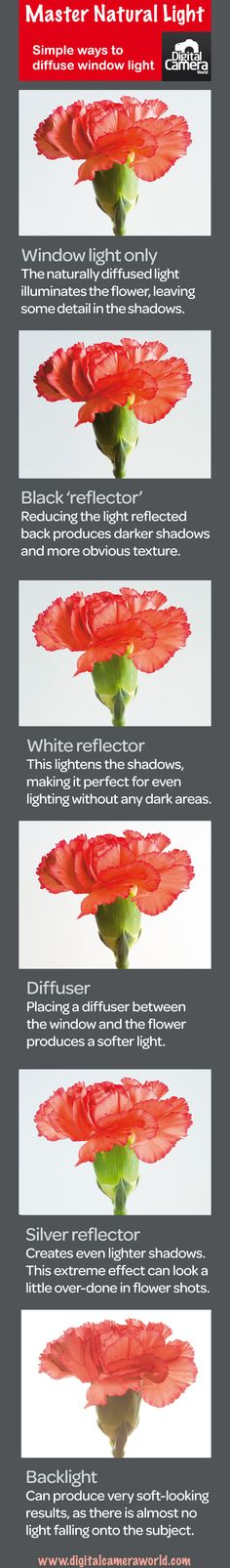 Photography cheat sheet: ways to diffuse window light for still lifes