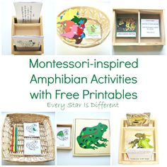 Every Star Is Different: Montessori-inspired Amphibian Activities with Free Printables (Learn & Play Link Up)