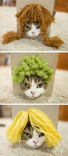 A cat in a wig is always a delight. International superstar Maru shows that you don't need to be a human to rock our hairstyles.