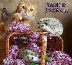Teddy Bear, Hugs, Dutch, Animals, Thursday, Big Hugs, Animales, Dutch Language, Animaux