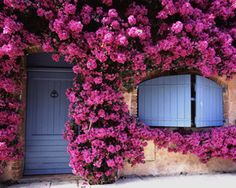 Bougainvillea doorway, Provence.