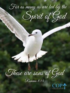 Romans 8:14 For as many as are led by the Spirit of God, these are sons of God.