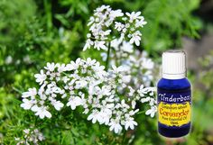 Coriander Essential Oil (Coriandrum sativum) for aromatherapy, skin care and natural perfumes. Tinderbox: supplying pure essential oils since Blue Glass Bottles, Beard Oil, Massage Oil, Pure Essential Oils, Sweet And Spicy, Raw Materials, Coriander, Herbalism, Fragrance