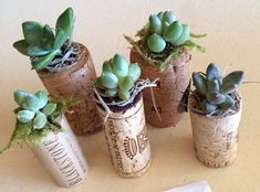 Wine Cork Succulent Planters by progressmama on Etsy, $8.00