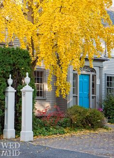 A beautiful tree showing peak color stands out against the turquoise blue door of this house on Pleasant Street.