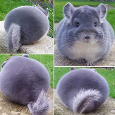 I love round butts and I cannot lie...