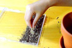 Grow your own grass garden: sprinkle seeds
