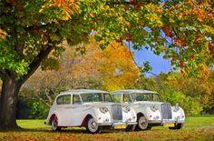 Jak w każdy poniedziałek, mamy ogromną przyjemność wyróżnić kolejną ofertę! 🏆🏆  Przedstawiamy Wam limuzyny do ślubu AUSTIN PRINCESS! 🏅  Proponujemy cztery auta retro do ślubu AUSTIN PRINCESS w kolorze kości słoniowej (1962r.) i kremowym (1963r.) z bordowymi nadkolami oraz w kolorze białym (1960r.) i czarnym (1962r.). Auta jak żadne inne idealnie nadają się na ceremonię ślubną.