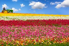 Photograph Flower Fields by Sameer Mundkur on 500px