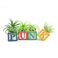 GREAT IDEA for those sets with missing blocks! !!!! -PUNK Alphabet Air Plants Planter Set - love it!