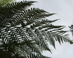 fern frond black and white image - Google Search