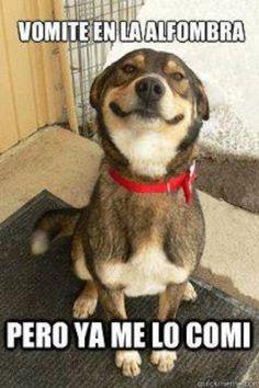 Los perros son tan cochinos y destructivos!!!---eww jajajaja  #compartirvideos #videowatsapp
