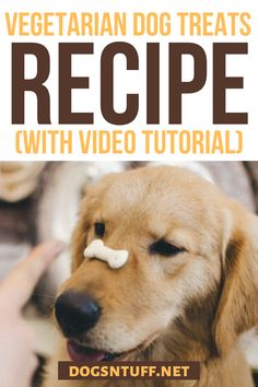 Here is an easy homemade hypoallergenic dog treats recipe/Vegetarian dog treat recipe for your allergic dog #HomemadeHypoallergenicDogTreats #VegetarianDogTreats #dogrecipes Vegetarian Dog Treats Recipe, Dog Treat Recipes, Dog Food Recipes, Diy Dog Treats, Homemade Dog Treats, Hypoallergenic Dog Treats, Dog Facts, Dog Friends, Allergies