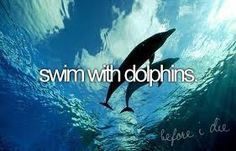 Swim with dolphins- CHECK! But I want to do it again so I actually remember it...