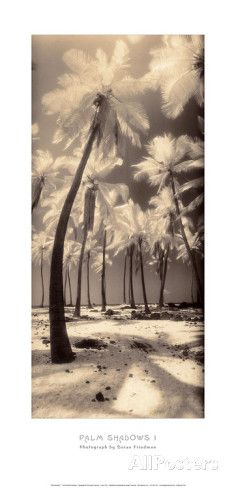 Palm Shadows I Canvas Art - Susan Friedman x All Poster, Cool Posters, Art Prints For Sale, My Canvas, Frames On Wall, Find Art, Art Photography, My Arts, Shadows