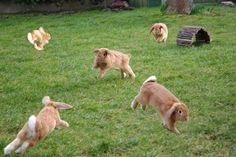 Cute funny bunnies