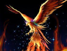 The Phoenix - La Fenice L'antro della Magia http://antrodellamagia.forumfree.it/?t=4439911&st=15