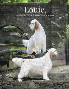 Louie! Gorgeous English Setter!!