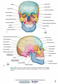 elizabeth hijab in congress - Hijab Medicine Notes, Medicine Student, Human Anatomy And Physiology, Human Body Anatomy, School Notes, Med School, Medical Students, Nursing Students, Skull Anatomy