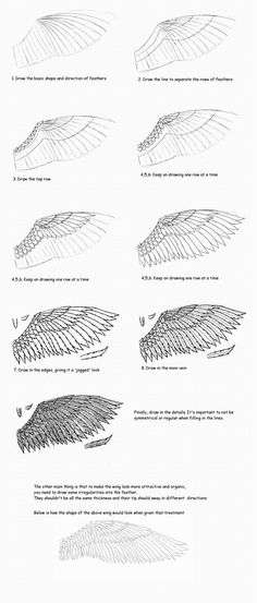 How to draw feathered wing