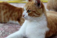 Mama cat ;)