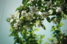 White Flower On Little Tree Branch Closeup Wallpaper