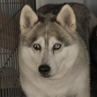 Available Pets At National Mill Dog Rescue In Colorado Springs Colorado Pet Adoption Dogs Pets
