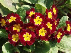Летните цветя се засяват още от средата на март