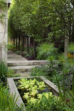 Beautiful garden in Chicago's Lincoln Park designed by Hoerr Schaudt. Water lettuce and papyrus populate the hypertufa pool.