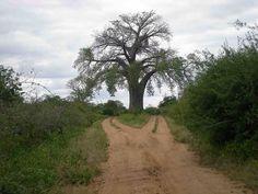 Zambezi dual-carriage way!