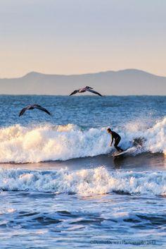 Surfing - Ventura - California ©Denise Dewire
