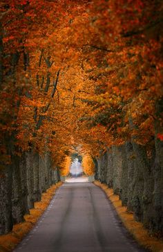 Sodermanland, Sweden.  Photo by Pierre Pocs.