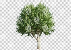 Broadleaf afternoon tree cutout by Gobotree