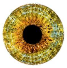HJR_Yellow_eye.png (1092×1104)