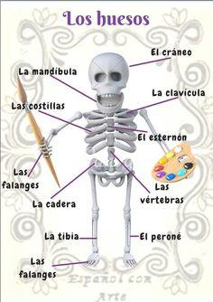 Spanish Practice, Learn To Speak Spanish, Ap Spanish, Spanish Language Learning, Spanish Class, Body Parts In Spanish, Spanish Projects, Language Immersion, Hispanic Culture
