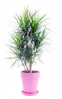 Schatten Pflanzen Zimmerpflanzen Wenig Licht | Zimmerpflanzen ... Licht Fur Die Zimmerpflanzen Dunkle Platze