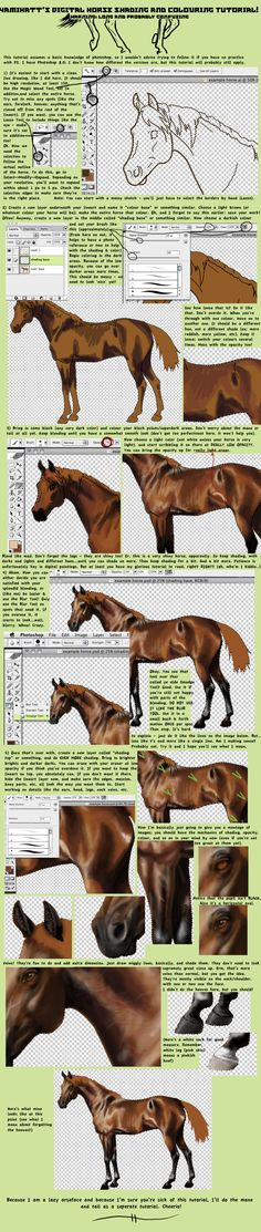 Digital Horse PaintingTutorial by YamiKatt on DeviantArt