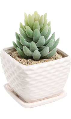 Contemporary White Ceramic Succulent Planter Flower Pot w/ Decorative Wavy Coil Design & Drainage Plate Best Price