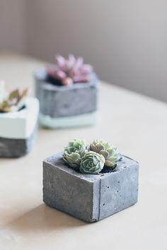 DIY Concrete Succulent with a milk carton and shot glass.