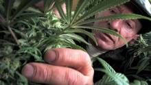 New medical marijuana rules may make it harder for those in need to get medication Please share....  Thank U.   Alison Myrden Federal Medical Marijuana Exemptee in Canada Retired Law Enforcement Officer Speaker for LEAP since 2004 Law Enforcement Against Prohibition http://www.leap.cc/ Ontario Representative for the Coalition Against Repeal DPL/PPL Coalition Against Repeal http://www.mmarcoalitionagainstrepeal.com/