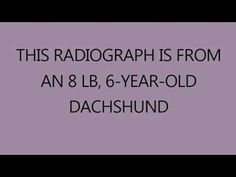 Veterinary case: Cystotomy of  6-year-old Dachshund