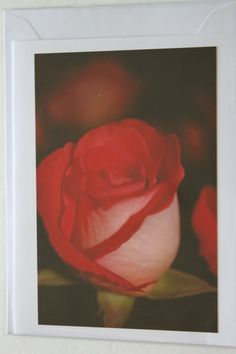 Red Rose Photo Note Card Red Rose  Blank Note Card by manukai