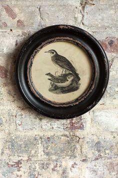 Distressed Wood Framed Vintage Bird Print - II