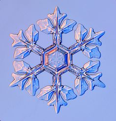 "snowflakes+pictures | ... & Shop , then search for ""holiday snowflakes"" (include the quotes"