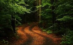 New nature wallpaper trees forests ideas New Nature Wallpaper, Desktop Background Nature, Forest Wallpaper, Modern Wallpaper, Forest Path, Tree Forest, Forest Pictures, Nature Pictures, Nature Inspired Names