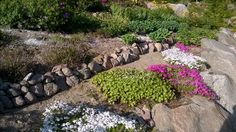 #omapiha kivikko ja sammalleimut 😍